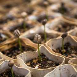 Cereali e legumi germinati